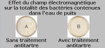 effet champ  électromagnétique sur bactéries